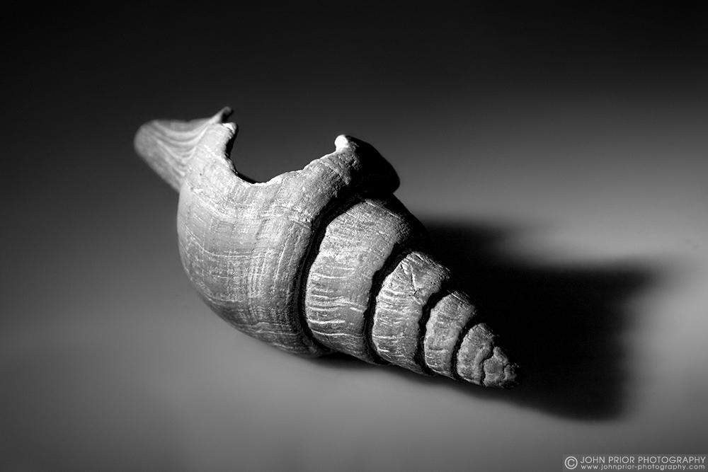 photoblog image The old shell
