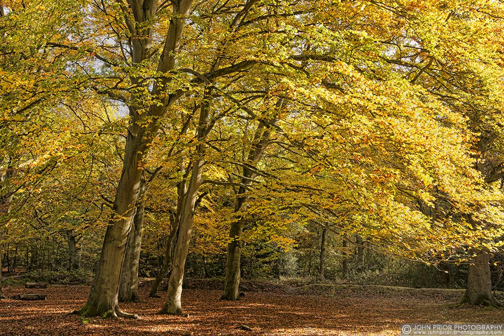 photoblog image Burnham Beeches