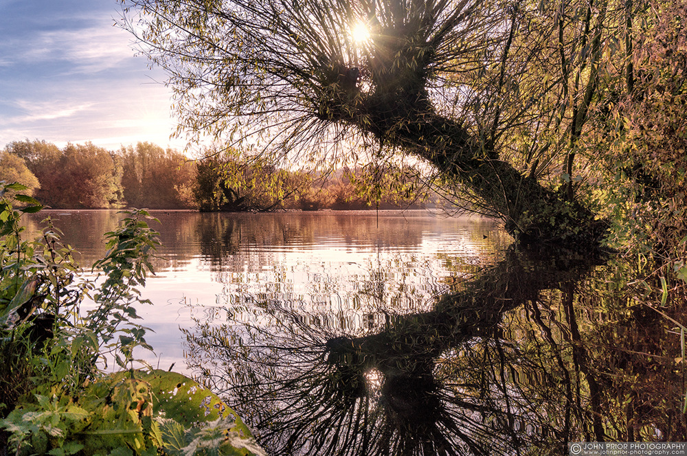 photoblog image Willow mirror