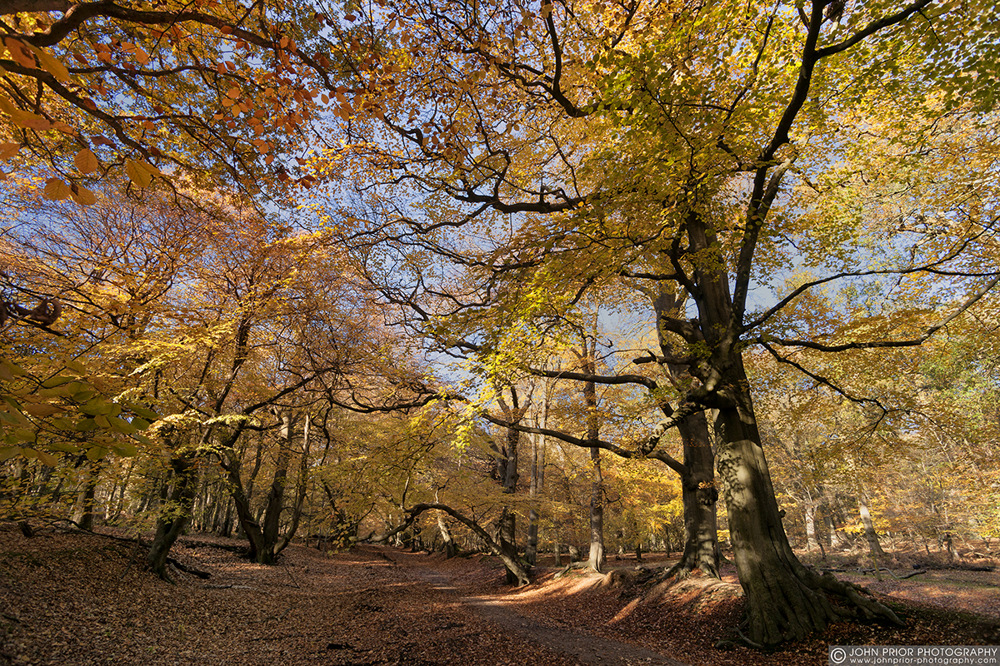photoblog image Much photographed path at Ashridge.