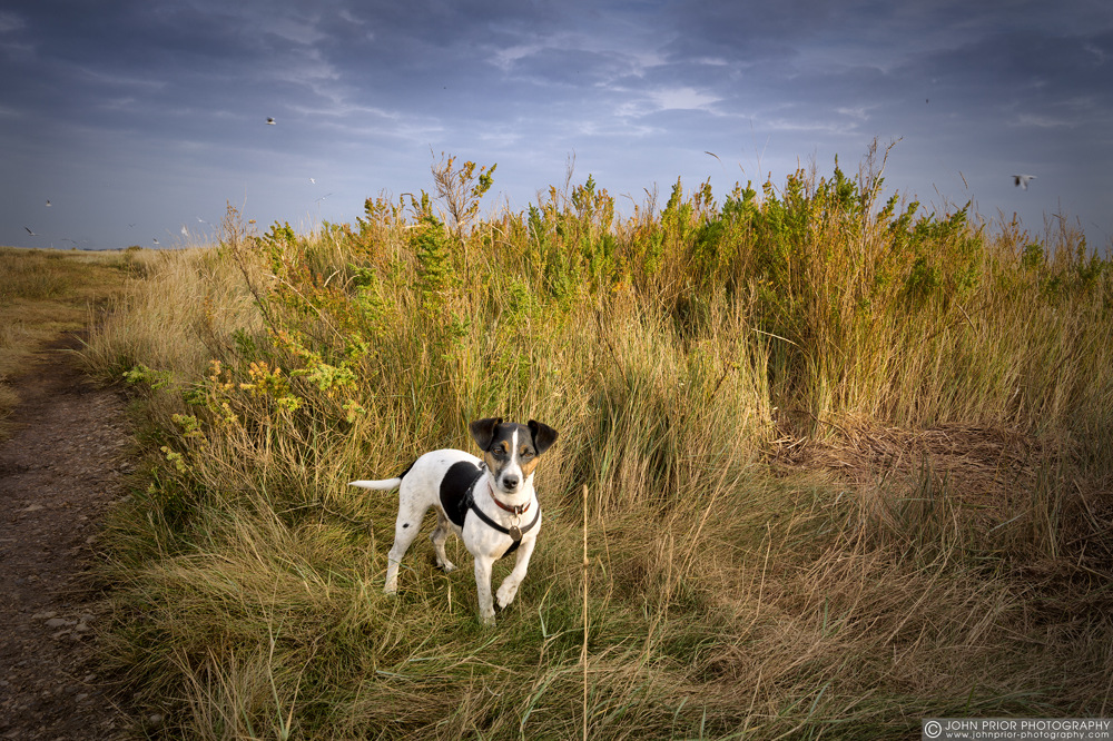 photoblog image Marsh dog